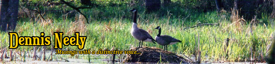 An attentive goose standing on a muskrat house