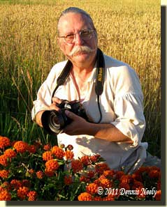 Dennis photographing wildflowers