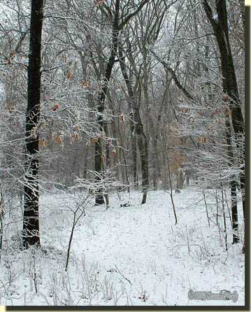A light snow covering the wagon trail that led through the woods.
